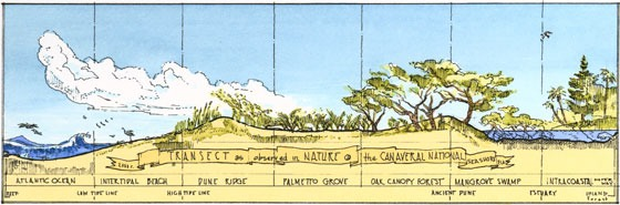 natural transect illustration by James Wassell