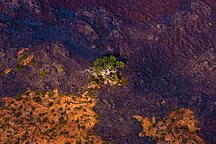 lone tree standing at the border between two lava flows on the Big Island of Hawaii
