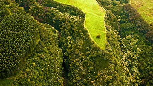 fields and forests on the north side of Hawaii's Big Island