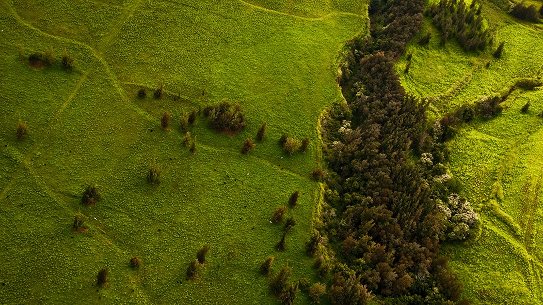 a few trees scatter across a meadow out of a nearby river gorge on the northern slopes of Hawaii's Manua Kea