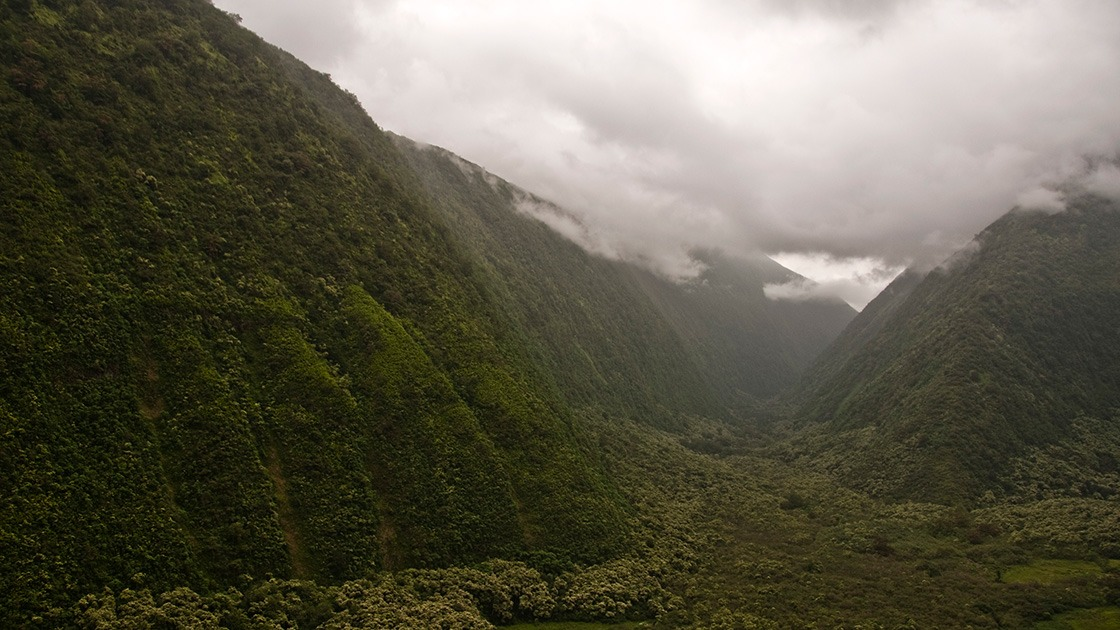 green-carpeted gorge cuts deep into Hawaii's Big Island as the tropical rain clouds hang low overhead