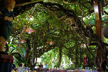 vine-and-arbor ceiling of restaurant at Anacapri, Isle of Capri