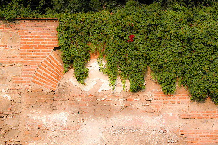 vines reclaiming an ancient brick wall along a street in Antigua Guatemala
