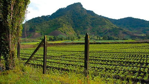 vegetable field in Cerro Punta, Panama with mountain in background