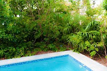 native landscaping and pool of the Chael-Dover Cottage in Miami, Florida