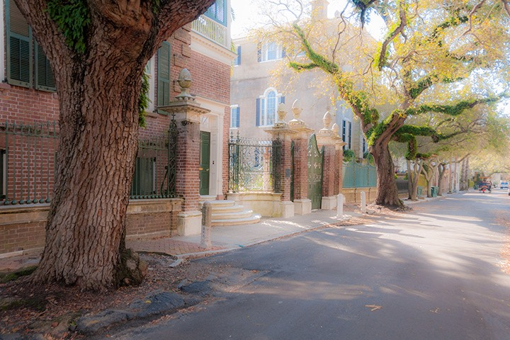 centuries-old oak trees shade Charleston residential street on early spring morning