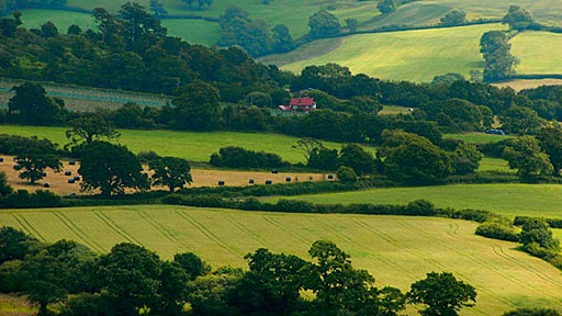 farm fields in the Dorset countryside in England