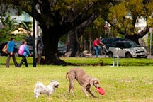 two dogs playing frisbee in open field of Flamingo Park in Miami Beach