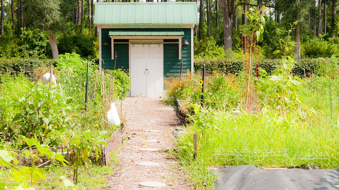 Habersham, South Carolina community garden is the least lovely part of the neighborhood