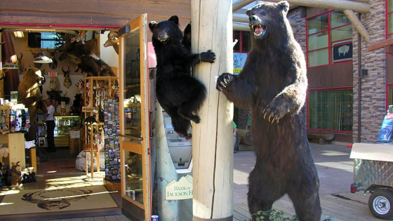 stuffed bear and cub in Jackson Hole, Wyoming