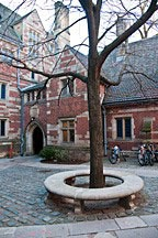 tree surrounded by stone bench in courtyard at Yale University