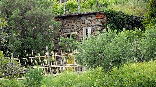 stone shed in gardens near Corniglia, in the Cinque Terre of Italy