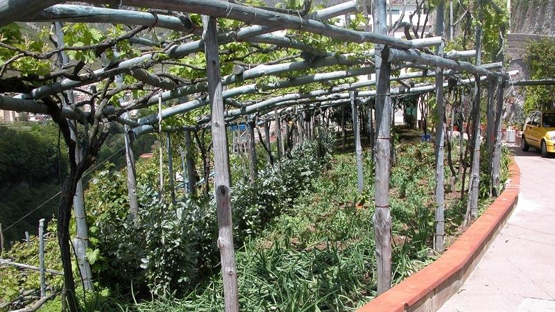 Ravello 04MAY09 9741. Bio Intensive Gardens ...