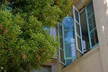open casement windows shaded by tree leaves in San Francisco