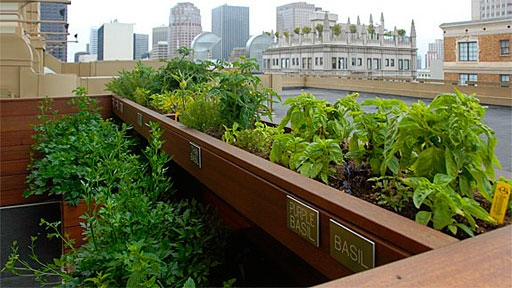 rooftop herb garden at Aurea, a San Francisco restaurant at the Stanford Court hotel
