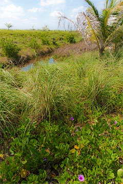 landscape and wetland at Schooner Bay, Bahamas