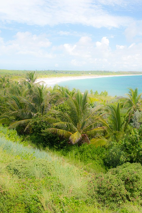 lushly planted dunescape curves to the horizon at Schooner Bay in the Bahamas