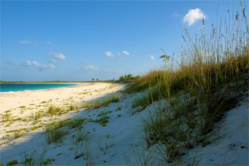dune at Schooner Bay, Bahamas